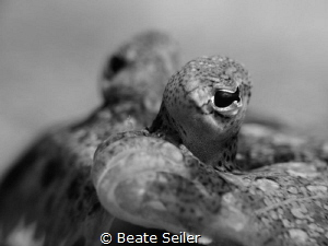 Flounder B/W by Beate Seiler