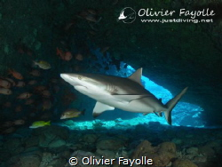 Shark cave in Mauritius, amazing landscaping with some ni... by Olivier Fayolle