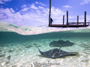 Stingrays of Ship Channel Cay. My 1st attempts at split s... by Sean Chinn