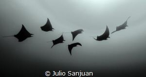 Manta's Melody by Julio Sanjuan