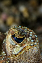 [:b:]Flounder's eye.[:/b:] by Francesco Pacienza