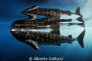 Reflections by Alberto Gallucci