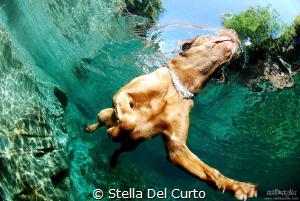"""""""Swimmer Dog"""" - Verzasca river, Ticino, Switzerland by Stella Del Curto"""