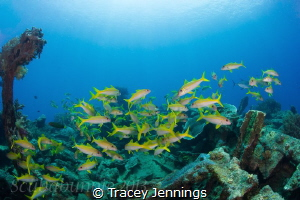 Exploratory diving Indonesia by Tracey Jennings