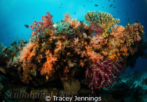 exploratory diving - Indonesia by Tracey Jennings