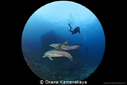 Surprisingly! Dolphins came to wreck Giannis D unexpecte... by Oxana Kamenskaya