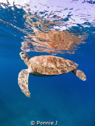Skin dive with Turtle by Ponnie J