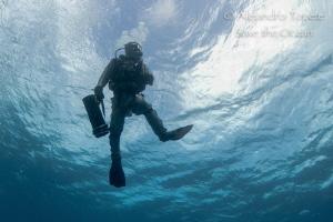 Sharkfeeder, Playa del Carmen mexico by Alejandro Topete