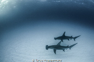 Here, Take My Fin Friendship comes in all shapes, sizes,... by Tanya Houppermans