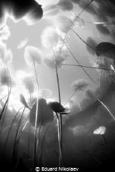 Silence/Russia lake Yalchik by Eduard Nikolaev