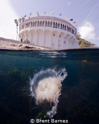 Jelly fish photographed at the Casino Point in Catalina I... by Brent Barnes