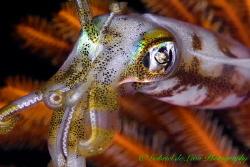 """Squid Magic"" by Gabriel De Leon Jr"