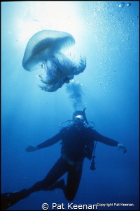 Great JellyFish Encounter. A quick shot 'taken from the h... by Pat Keenan