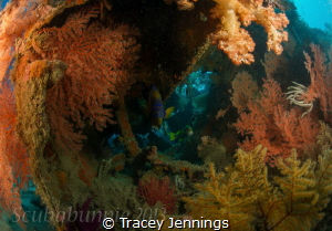 Autumn underwater by Tracey Jennings