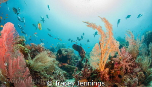 disney reef by Tracey Jennings
