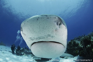 A quick inspection of my dome and her reflection before v... by Steven Anderson