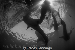 how many whale sharks ? by Tracey Jennings