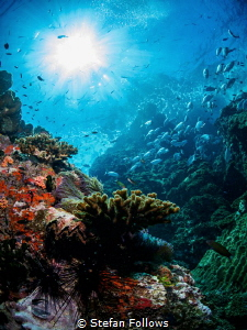Stairway ... !  Sail Rock, Thailand-EM5-Panasonic 8mm-i... by Stefan Follows