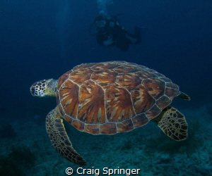 Turtle and Diver in Bonaire by Craig Springer