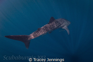 into the blue by Tracey Jennings