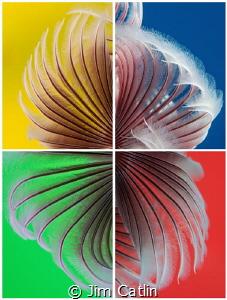 'Colour Wheel' - 4 different images, 4 different backgrou... by Jim Catlin