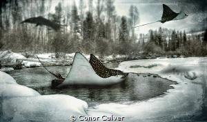 """""""Eagle Hunt"""" by Conor Culver"""