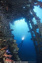 Inside the Wreck SS Carnatic by Oxana Kamenskaya