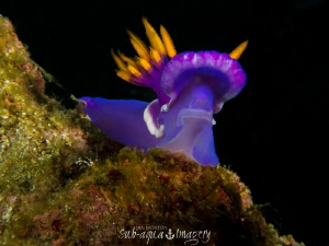 Wearing the Miss Nudibranch Crown