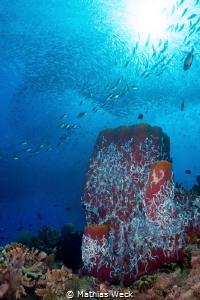 Philippines - Cebu - Moalboal - Pescador Island - Coral Reef by Mathias Weck