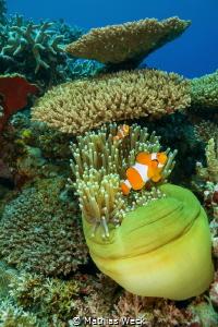 Philippines - Cebu - Moalboal - Coral Reef by Mathias Weck