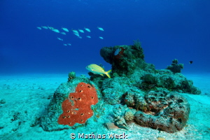Mexico - Cozumel - Reef by Mathias Weck