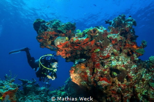 Mexico - Isla Mujeres - Reef by Mathias Weck