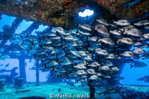 Mexico - Isla Mujeres - Canonero 58 Wreck by Mathias Weck