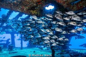 Mexico - Isla Mujeres - Canonero 58 Wreck by Mathias Weck