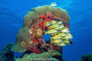 Mexico - Isla Mujeres - Lord Helmet Reef Block by Mathias Weck