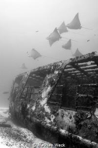 Mexico - Isla Mujeres - Canonero 55 Wreck by Mathias Weck