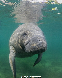 A Midday Swim