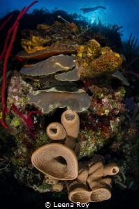 Reefscape by Leena Roy