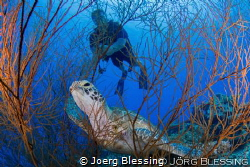 chilling in the black coral bush... by Joerg Blessing