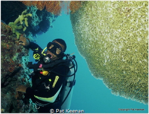Having a break from shark diving (only for a day). Image ... by Pat Keenan