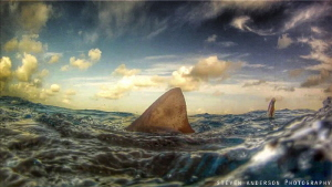 A good sign that there are Sharks below the surface at Ti... by Steven Anderson