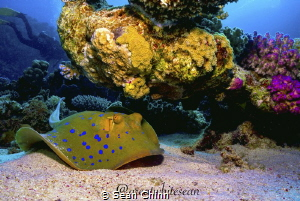 Beautiful Colours of the Red Sea by Sean Chinn