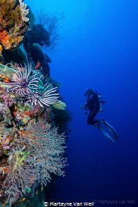 Wall at Radha Shu Haa in Laamu Atoll with diver by Marteyne Van Well