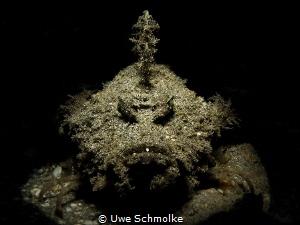 Sympathy for the devil - devil scorpionfish by Uwe Schmolke
