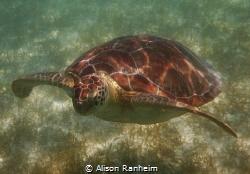 Akumal Bay, Yucatan, Mexico by Alison Ranheim