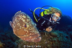 The Medes Islands friendly groupers with a diver by David Carbo