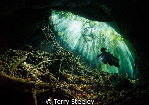 'Light beams in the Mangroves' Cenote Mangrova. (Bill's ... by Terry Steeley