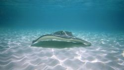 Sting Ray City 2. Canon Elph Sport. by Chris Lawford