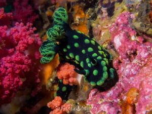 Smiley Happy Nudibranch in a Colourful Dream by Jan Morton