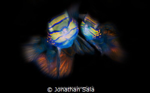 l'amour ..... by Jonathan Sala